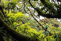 Forest Alive, Monteverde, Costa Rica