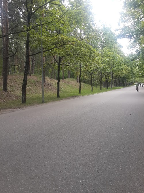 Rīgas meži, SIA