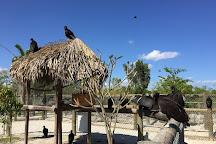 Everglades Alligator Farm, Homestead, United States