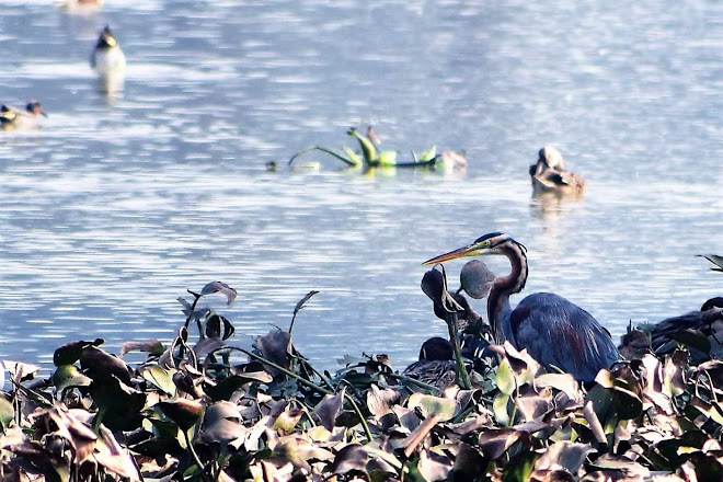 Visit Surajpur Bird Sanctuary on your trip to Greater Noida