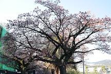 Atami Kaihin Park, Atami, Japan