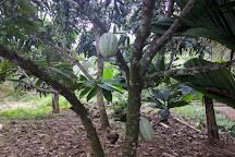 Rancho Raices de Osa, Puerto Jimenez, Costa Rica