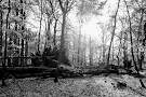 Palsjo skog