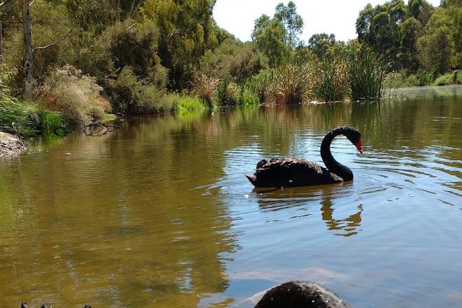 Breakout Creek Wetlands, Adelaide, Australia
