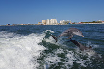 Little Toot Dolphin Adventures, Clearwater, United States