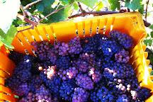 Harwood Estate Vineyards, Hillier, Canada