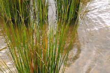 St George's Lake, Creswick, Australia