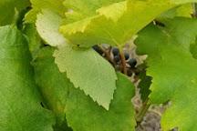 Windy Winery, Brenham, United States