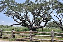 The Big Tree, Rockport, United States
