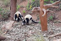 Lemurs' Park, Antananarivo, Madagascar