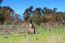 Hattah-Kulkyne National Park, Victoria, Australia