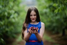 Cherryhill Orchards, Wandin East, Australia