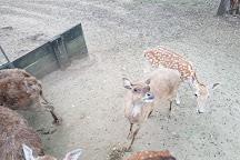 Lyell Deer Sanctuary, Mount Samson, Australia