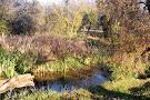 Groenkloof Nature Reserve