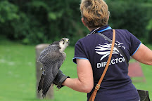 The International Centre for Birds of Prey, Newent, United Kingdom