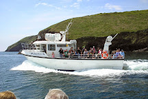 Dingle Boat Tours, Dingle, Ireland