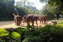 Hangzhou Safari Park, Hangzhou, China