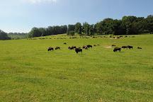 Reve de Bisons, Muchedent, France