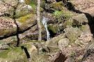 Walls of Jericho Alabama Trailhead
