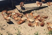 Beach Plum Farm, West Cape May, United States