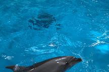 Aomori Asamushi Aquarium, Aomori, Japan