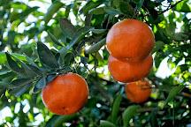 Sun Harvest Citrus, Fort Myers, United States