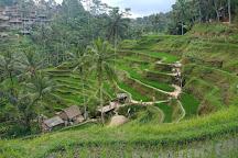 Bali Tour Activities, Denpasar, Indonesia