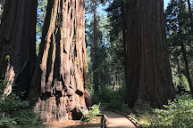 Calaveras Big Trees State Park, California, United States