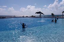 Dolphin Discovery Akumal, Akumal, Mexico