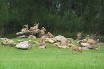 Taronga Western Plains Zoo, Dubbo, Australia