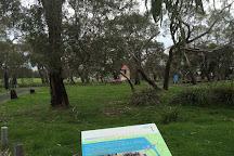F Oswin Robert Koala Reserve, Phillip Island, Australia
