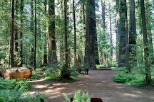 Humboldt Redwoods State Park, Weott, United States