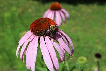 Hatcher Garden and Woodland Preserve, Spartanburg, United States