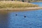 Swan Lake Trail