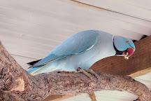 Birdworld Kuranda, Kuranda, Australia