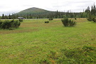 Pallas-Yllastunturi National Park