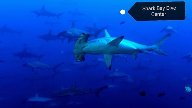 Shark Bay Dive Center