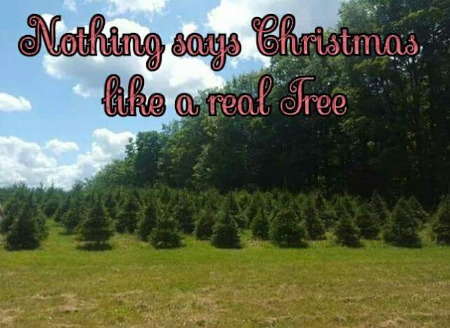 4 EverGreen Tree Farm