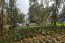 Entoto Natural Park, Addis Ababa, Ethiopia