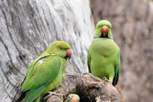 Corbett Safari, Jim Corbett National Park, India