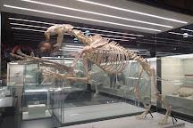 Regional Archaeological Museum of Madrid , Alcala De Henares, Spain