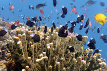 Coral Coast Divers, Coral Coast, Fiji
