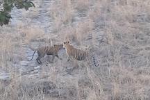 Ranthambhore Tiger Reserve, Sawai Madhopur, India