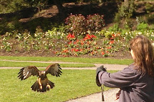 Ireland's School of Falconry, Cong, Ireland