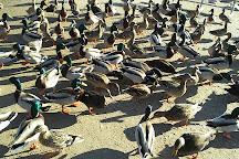 Bay Beach Wildlife Sanctuary, Green Bay, United States