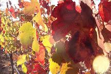 Cantiga Wineworks, Somerset, United States