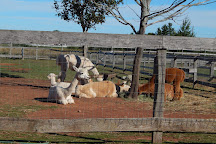 Green Gable Alpacas, Tyne Valley, Canada