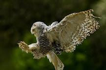 The British Bird of Prey Centre, Carmarthen, United Kingdom