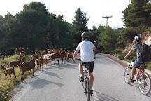 Skopelos Cycling, Skopelos Town, Greece