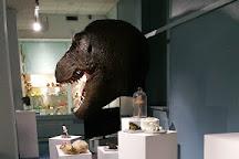 Museum D'Historie Naturelle De Tours, Tours, France